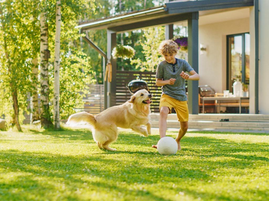 chien qui joue au ballon avec un enfant