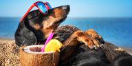 Chien drôle allongé sur la plage avec des lunettes de soleil et un cocktail