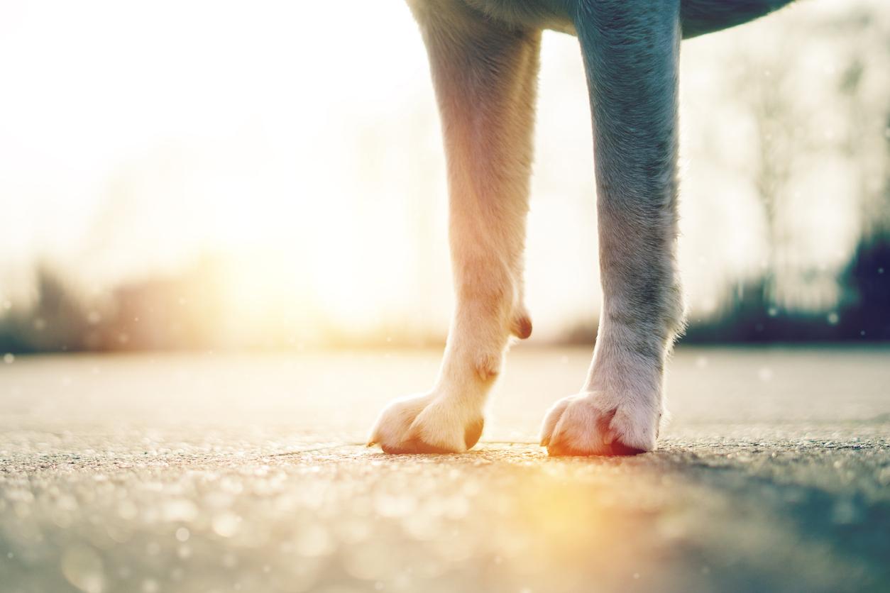 Pattes de chien sur le goudron