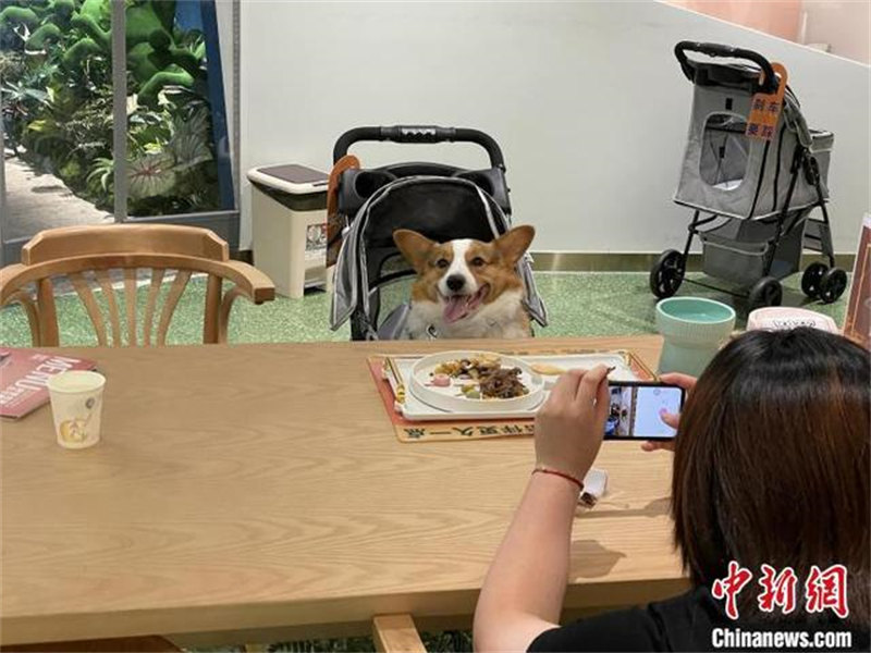 chien dans un restaurant de Shanghai