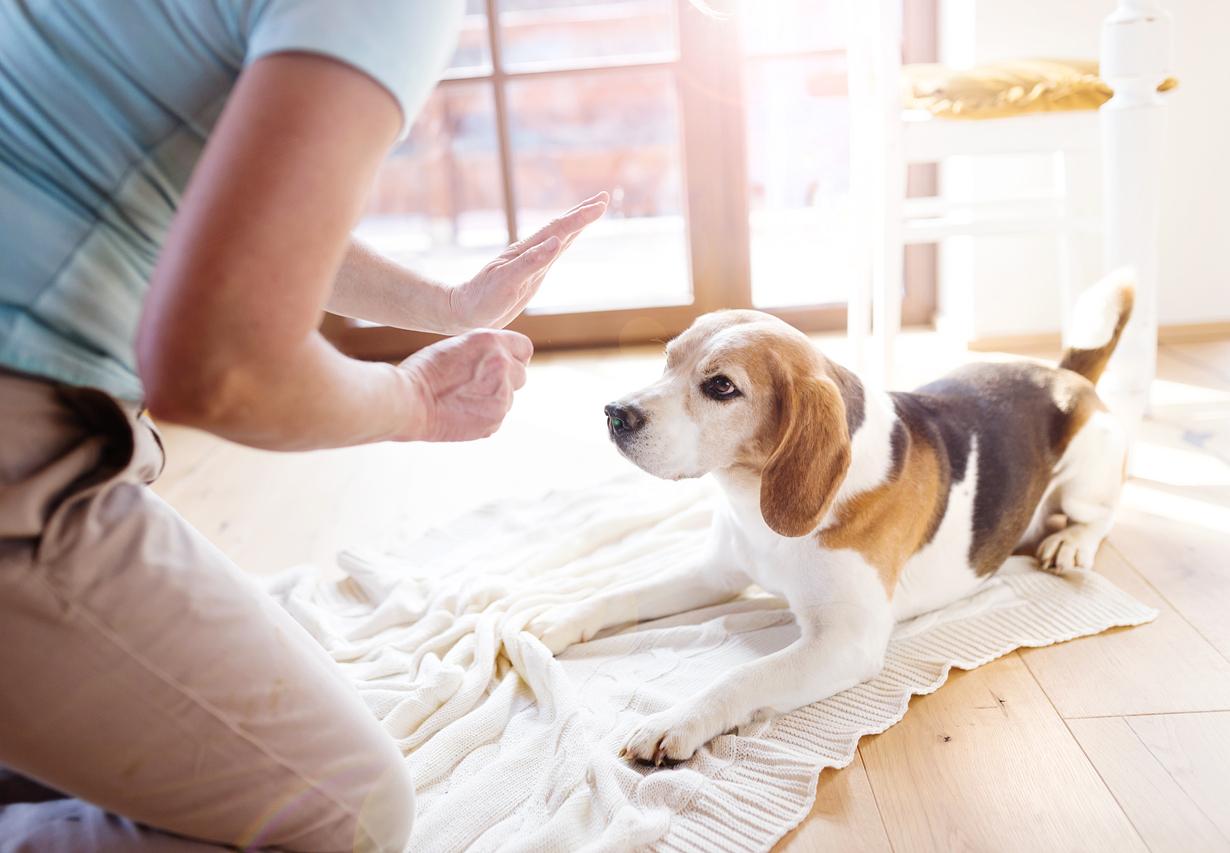 chien qui écoute les ordre de sa maitresse