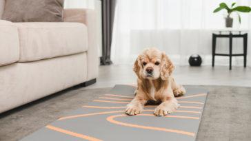 chien allongé sur un tapis