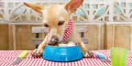 chien en train de manger à table au restaurant