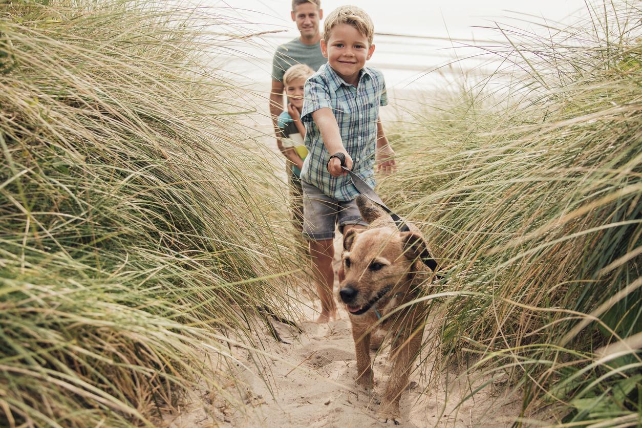 Chien en balade à la plage avec sa famille