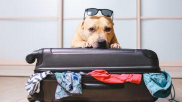 Chien couché sur une valise avec des lunettes de soleil