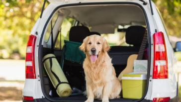 Chien dans le coffre de la voiture pour partir en vacances