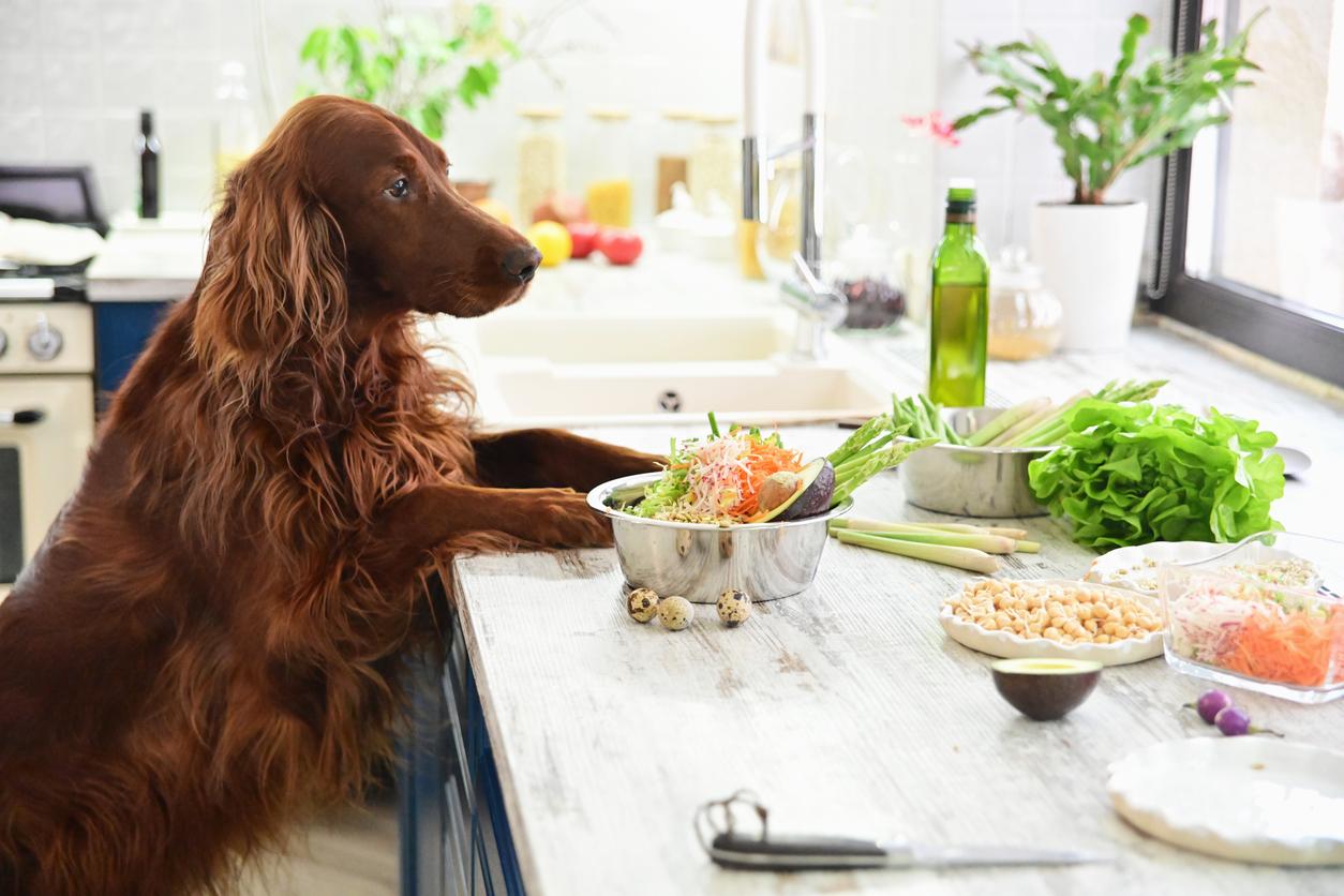 Chien avec des légumes