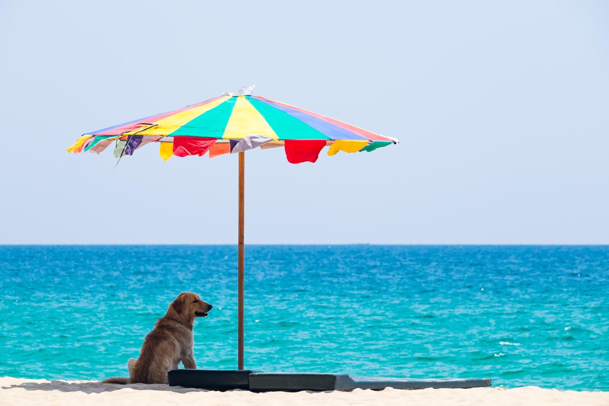 Chien à la plage à l'ombre sous le parasol
