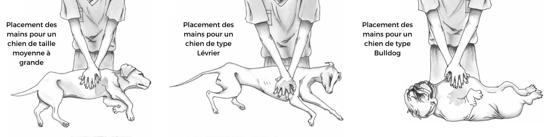 techniques de massages cardiaques sur chien