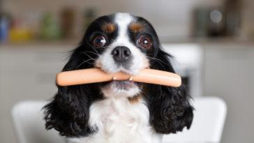 chien avec une saucisse dans la gueule