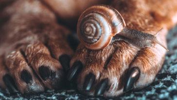 Escargot sur les pattes d'un chien