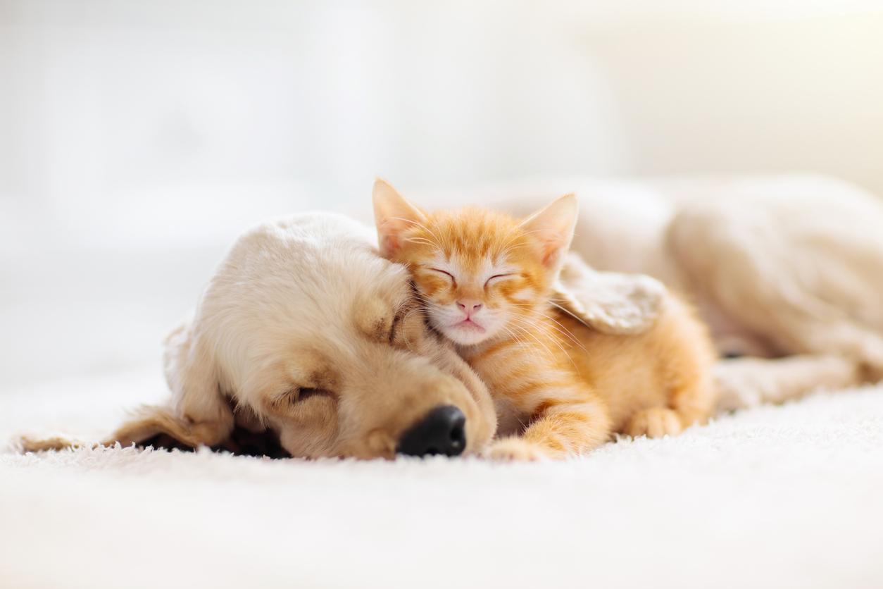 Chiot et chaton qui se font un câlin