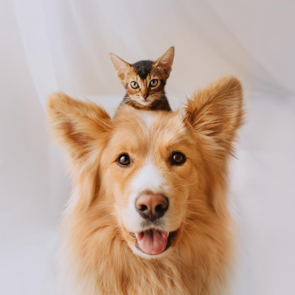 Chaton sur la tête d'un chien