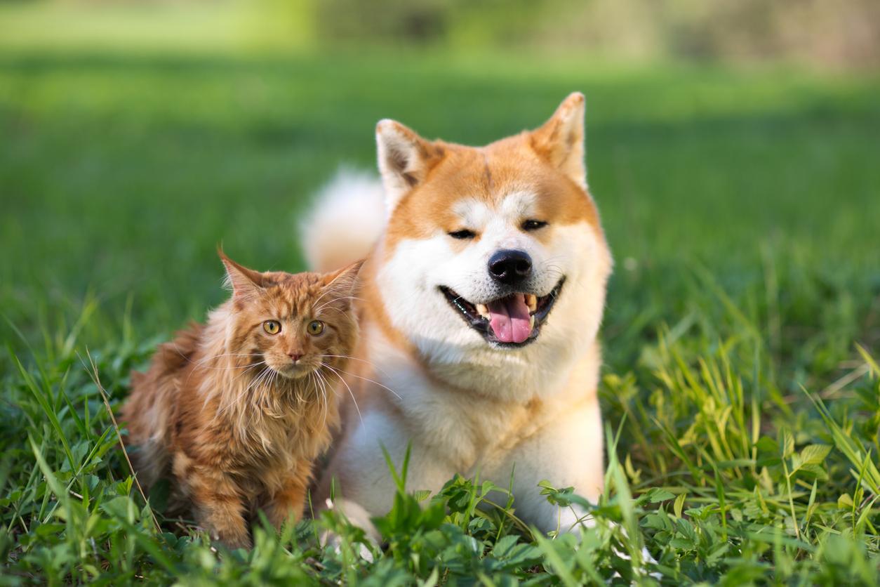 Chien et chat dans l'herbe