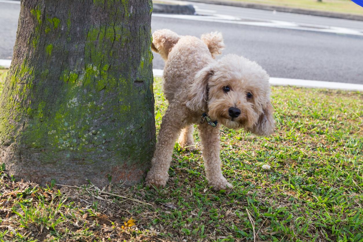 Chien qui lève la patte sur un arbre