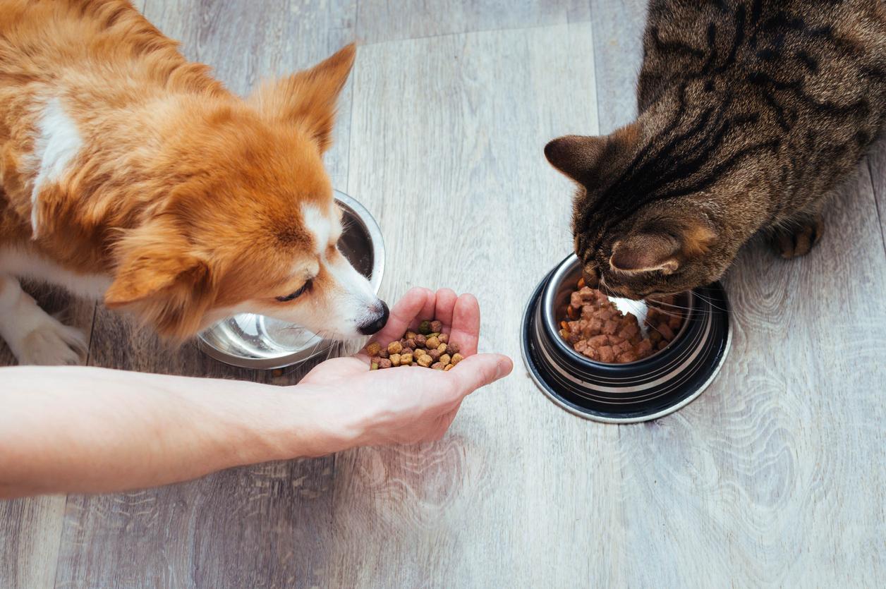 Chien et chat qui mangent
