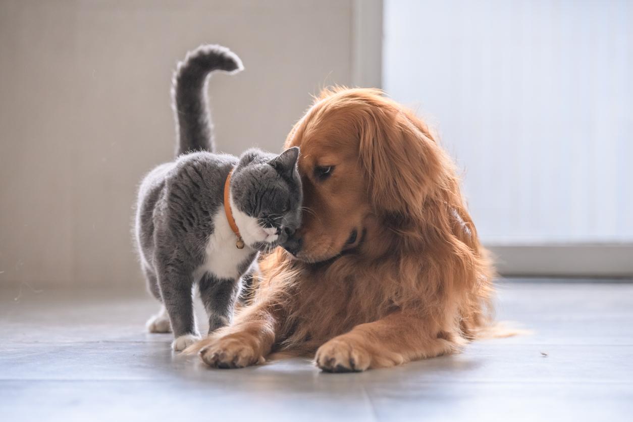 Chien t chat se faisant un câlin