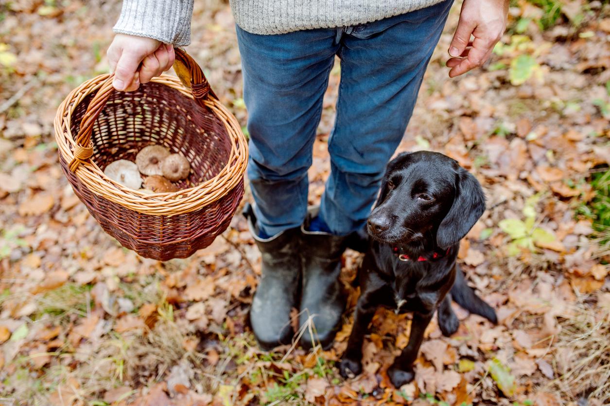 chien avec son maitre qui tient un panier rempli de champignons