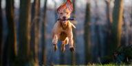 chien qui court avec un bâton dans la gueule