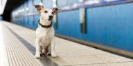 chien sur le quai du métro